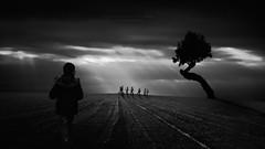 Por el mar corren las liebres... (Mariano Belmar Torrecilla) Tags: bw conceptual arbol nikos