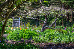 Let's Sit Under The Apple Tree (gr8fulted54) Tags: tree tonemapped hdr photomatix on1 nikon d7100