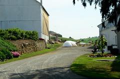 amish farm (bluebird87) Tags: barn nikon farm amish mules d7000