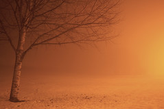 (www.tokil.it) Tags: milano italia italy citt city urban periferia suburb parcoforlanini park notte night notturno notturne neve snow luce light freddo cold albero tree nebbia fog minimale minimal minimalismo minimalism natura nature lungaesposizione longexposure nikond90