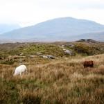 Highlands of Ireland thumbnail