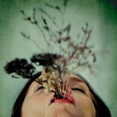Still life (Oscar Barrera Photography) Tags: artlibres