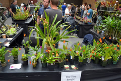2016-07-23 08758 Orchid Show, SF County Fair Bldg (Dennis Brumm) Tags: sanfrancisco california july 2016 orchids exposition flowers plants bromeliads