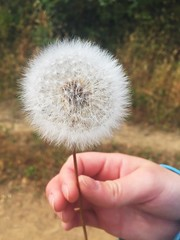 (EveningTeaWithMorganMarie) Tags: dandelion plant hike california color nature wish