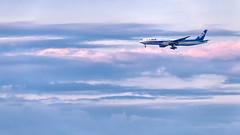 ANA Boeing 777-200 JA707A   Tokyo - Haneda Intl Airport (HND / RJTT) (blackqualis) Tags: 1dx eos1dx 150600mmsportss014 sigma150600mmf563sportss014 rjtt b777 b777200 ja707a