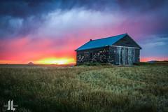 IMG_8672 (larzz4444) Tags: sunset sweatgrasshills chestermontana chester montana winterwheat gleaner drylandfarming joplinmontana wheatharvest