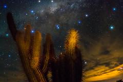 The Light in the Galaxy (Robelier Photoexplorer) Tags: light galaxy stars milkyway vialactea astrophotography night longexposure starspikes cactus sky dark chile vicua antakari rutaantakari regiondecoquimbo regionestrella elquivalley elqui