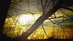 Nature's Hazy Sunset (CMF1983) Tags: sun sunset nature weather clouds branches tree trees forest sky skyline sunshine fishlakemeadows romsey hampshire uk nikon d3300 tamron flickrsbest twop