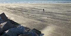 Wind in de rug (Tim Boric) Tags: zand strand velsennoord noordpier zee sea wind basalt