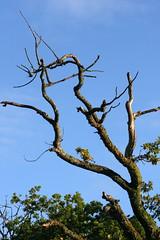 tree_sky (odysseus62) Tags: lochlomond benlomond scotland 2016 september