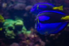 IMG_0031 (Samihan Patel) Tags: blue moon flower zoo monkey jellyfish seahorse turtle snake houston flamingos frog crocodile elephants sealion dory htx