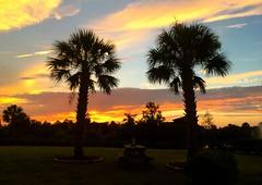 Pleasant Backyard Sunset (TrackHead Studios) Tags: trackhead trackheadxxx trackheadstudios adamhall sunset sunsets sunrise trees palmtree palmetto palmtrees silhouette silhouettes sky clouds