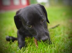 Hunde Welpen (D.STEGEMANN) Tags: pet hund dog welpen mischling
