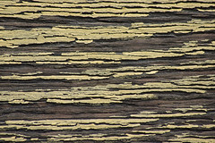 Wall (Seth J Dewey Photo) Tags: texture newhampshire nashua flickrphotowalk