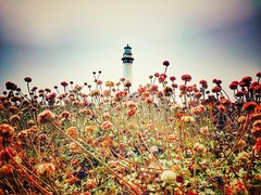 Pigeon Point Lighthouse...and I saw a weasel! (shollingsworth) Tags: pigeonpoint lighthouse californialove hollingsworth iphoneography flowers pretty stephenhollingsworth pigeonpointlighthouse state park statepark