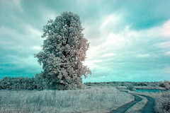 (klgfinn) Tags: cloud grass infrared ir lake landscape road sky summer tree water