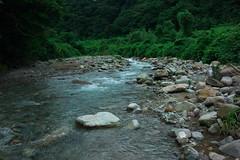 AGR River DSC_2766 (touhenboku) Tags: iwana yamame trout fly flyfishing fishing