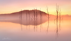 Lake of Fire (Ben Cue) Tags: lakesamsonvale fog deadtrees calm