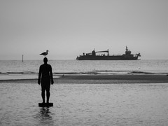 farewell (vfrgk) Tags: bird ship man art artwork minimal shore horizon water waterscape tranquil tranquility serenity serene seagull monochrome blackandwhite bw seaview seascape seashore antonygormley sculpture crosbybeach liverpoolbay calmness sea