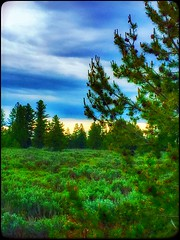 Timeless... (Sherrianne100) Tags: sunset trees view grandtetonnationalpark park