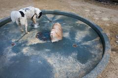 washington square park dog run (Charley Lhasa) Tags: ricohgrii grii 183mm 28mm35mmequivalent iso400 secatf28 0ev aperturepriority pattern noflash r008162 dng uncropped taken160716193437 uploaded160721223235 3stars flagged adobelightroomcc20156 lightroomcc20156 adobelightroom lightroom charley charleylhasa lhasaapso dog dogs fountain water waterdish waterbowl washingtonsquareparkdogrun dogrun bigdogrun washingtonsquarepark wsp nycparks citypark urbanpark greenwichvillage manhattan newyorkcity nyc newyork ny tumblr160721 httpstmblrcozpjiby29epy0m