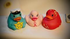Rubber Ducky Trio (BKHagar *Kim*) Tags: bkhagar duck ducky rubberducky toy rubber plastic bath bathtime tub bathtub