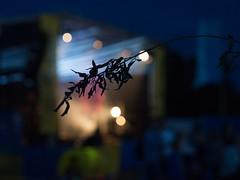 Goodnight Boondocks! (JamesPyle) Tags: boondocks malmesbury wiltshire 45mm f18 3200 iso em5 olympus omd nightime bokeh blur