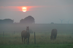 Horses in the Mist (Infomastern) Tags: sdersltt cloud countryside dimma fence fog horse hst landsbygd landscape landskap mist sky sol soluppgng sun sunrise exif:model=canoneos760d exif:isospeed=400 geocountry camera:make=canon geocity camera:model=canoneos760d geostate geolocation exif:lens=efs18200mmf3556is exif:aperture=56 exif:focallength=140mm exif:make=canon
