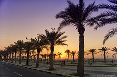 the dates tree (azahar photography) Tags: bahrain manama arab riffa palmtree sunset dessert park purplrsky colorful road track