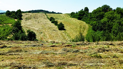 haymow (my lala) Tags: hay haymow meadow mowing green nature hiking serbia srbija mountain