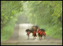 To school in the rains!  Distorted because of UV filter :( (indianature13) Tags: sgnp sanjaygandhinationalpark forest jungle westernghats nature indianature monsoon mumbai india 2016 august borivili adivasi tribal adivasisinsgnp