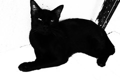 R0020793 (kenny_nhl) Tags: ricoh grd grdiv grd4 provoke street streetphotography dark shadow snap shot scene surreal visual 28mm monochrome malaysia black blackwhite bw blackandwhite photo photography explore explored cat