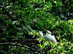 Bayard Cutting Fields Arboretum (77) (pensivelaw1) Tags: suffolkcounty newyorkstate longisland bayardcuttingarboretumstatepark