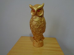 262-366-2016_G9I_01_Owl_Collection_134 (maiaadeni) Tags: 2016yip strigo owl coruja