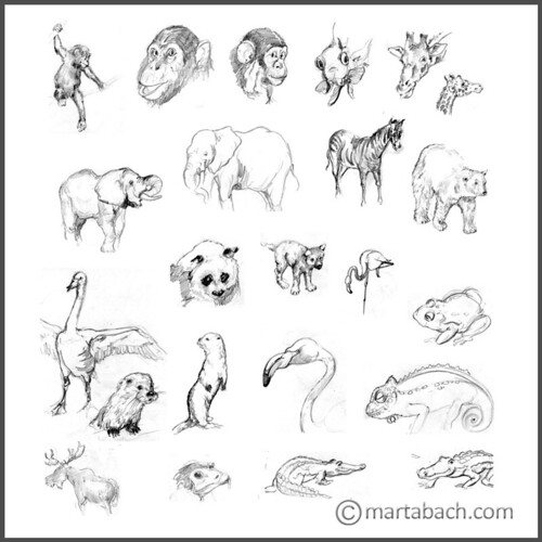 marta_bach-animales