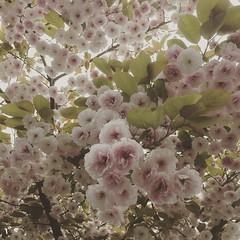Photo of 2015-05-22 Blossom
