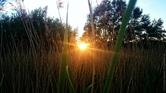 Sunset in the bossom of nature (dksesh) Tags: trees wild plants reed nature grass walking freshair sony reserve fitness twigs bushes hounslow seshadri sesh harita naturewalking sonyxperia dhanakoti haritasya seshfamily sonyxperiaz2 hounslownature fireshwildnessair