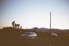 000015840024 (kneuhof) Tags: california road trip camping cactus tree film nature 35mm landscape la los angeles joshua hiking katie joshuatree roadtrip portra neuhof