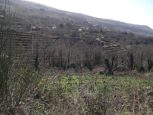 Tout Berry Farms at Nabeh El Saffa b 2014