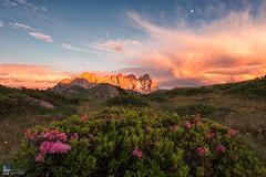 Elements (Edoardo Brotto) Tags: dolomiti dolomites paledisanmartino rododendri fioritura alpina blossom alpine flowers alpenglow enrosadira cimondellapala vezzana clouds sunset moon edoardobrotto