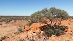 mulga country (ClareSnow) Tags: winter cue australia outback redrock acacia arid breakaway reddirt floodplain mulgacountry mulgascrub