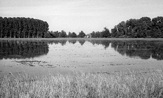 Eternal Ritual n.19 (Alessio Conti) Tags: analogue film filmcamera filmphotography analoguephotography fed3 kodak tmax 400iso expired landscape country countryside rural reflection eternalritual lombardia campagna