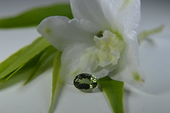 Zoisite. (gem.mania) Tags: zoisite gem gemstone neon green flower white delphinium