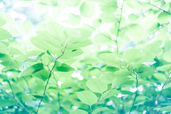 quiet (55Laney69) Tags: nikond600 nikon50mmf18afsg 50mm bokeh nature wideopen pastel dreamy soft colors softtones peaceful quiet life trier germany primelens