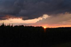 Sunset (azyef94) Tags: sunset sonnenuntergang sun sonne photography flickrnature nature sunsetshot himmel absolutsky nikkor