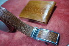 IMGP6397 (lelamminh) Tags: crocodile alligator watchstrap watchband wallet menbelt