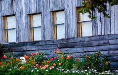 Windows (kumherath) Tags: window wednesday cottage sri lanka canon kumari herath 100400 lens nuwara eliya