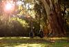 Hamacas del olvido (Ottino Ro) Tags: hamacas parque rauch verde sol park sun nature naturaleza buenosaires pueblos lugares simple