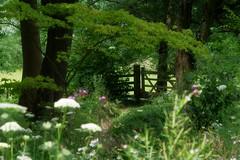 1291-18L (Lozarithm) Tags: hidcote nt flora blipmeet pentaxzoom k50 55300 hdpda55300mmf458edwr paths gate