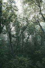 (JoeLowrey) Tags: cook forest pennsylvania fog moody nature scenic green outdoors high sunlight landscape